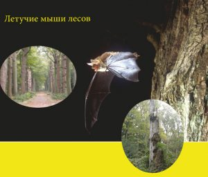 Cover of the borchure 'Bats and forestry'.
