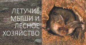 Leaflet Bats and forestry in Belarus_Cover